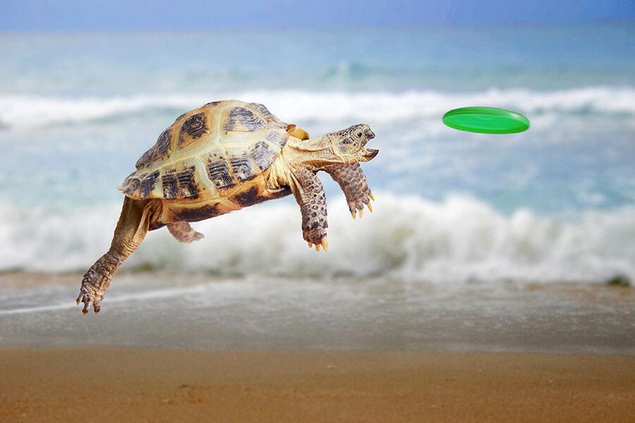 tortoise-900